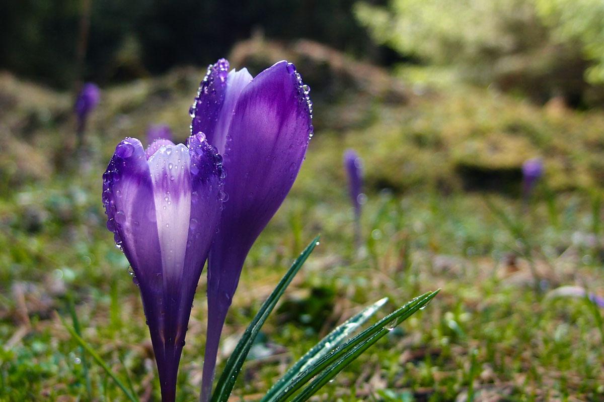 primăvara la Ic Ponor
