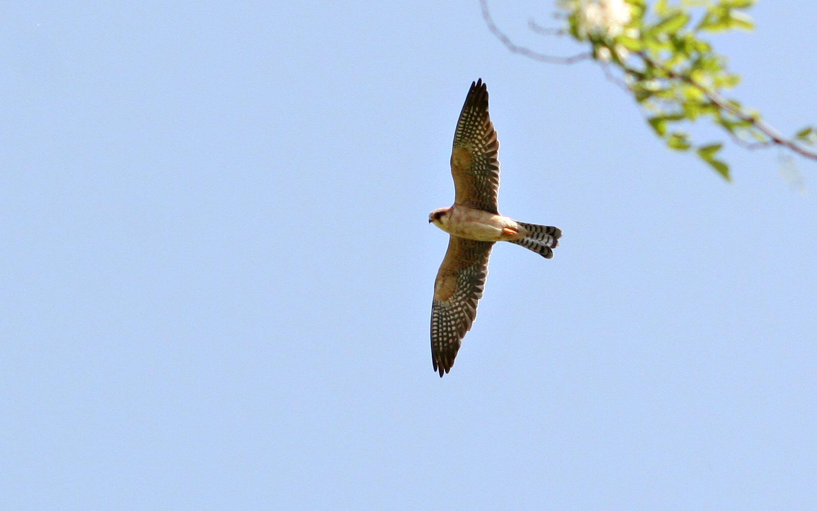 prin Câmpia de Vest, căutând cele mai rare păsări din România
